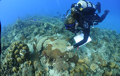 UVI's Marine Science Professor Brandt records bleaching of Coral Underwater.