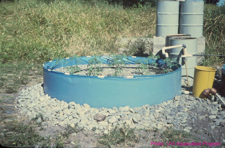Wading pool system for aquaponics