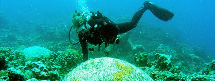 UVI Researchers ID Cause of White Plague Coral Disease