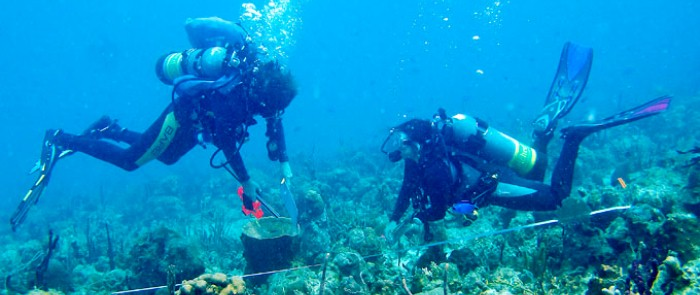 Caribbean Sea is the laboratory for marine science students.