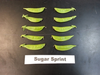 snap pea 'Sugar Sprint'