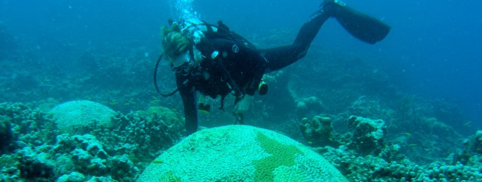 CMES Researcher Dr. Marilyn Brandt assessing coral health