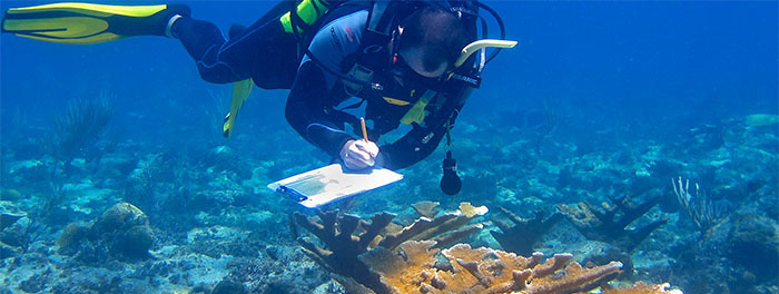 CORAL REEF RESEARCH... click image for more