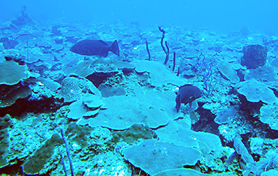 Undergraduate Students researches the death of Corals in the Caribbean Sea.