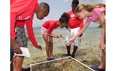 YOE students are assessing the variety of different marine life found in the nearshore environment. This includes urchins, crabs, snails, etc