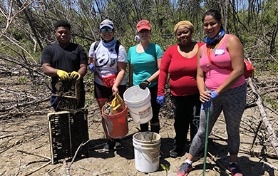 UVI Students and community members take part in an annual Mangrove Clean-up