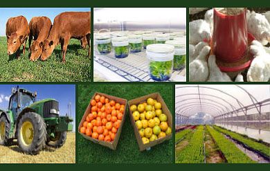 CES Shows the many Facets of Agriculture